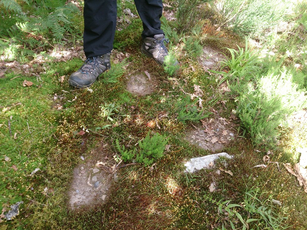 Holes left in the ground by brown bears marking with their feet while walking (photo credit: Javier Naves, none usage restrictions)