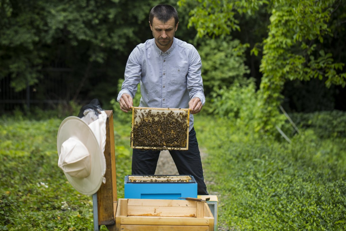Dr Adam Tofilski at the beehives holding the wax foundation which is a plate made of wax with the base of the honeycomb